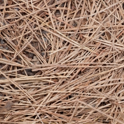 Greensboro Pine Straw