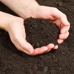 Greensboro Top Soil