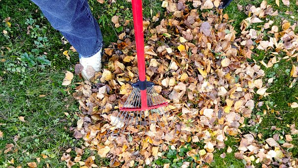 Leaf-Removal- Greensboro